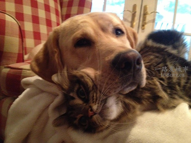 the-best-funny-pictures-of-dogs-sitting-on-cats-08-TVH2mRw.jpg